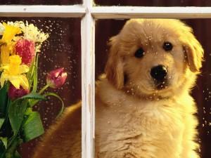 Perrito en la ventana un día de lluvia