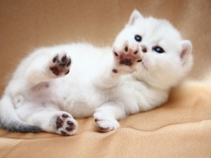 Las patitas del gato