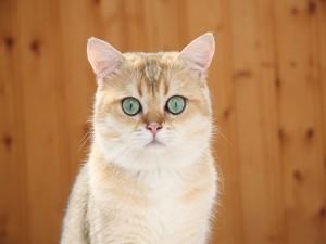 Gato con bonitos ojos