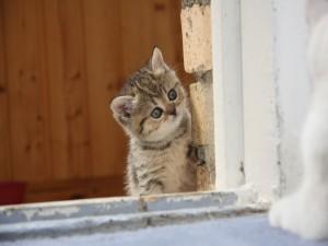 Postal: Gatito curioso en la ventana