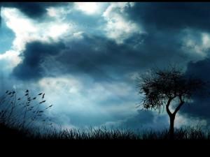 Pájaros en el cielo azulado
