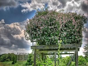 Postal: Flores en una plataforma de madera