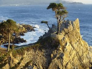 Postal: Árboles en las rocas junto al mar