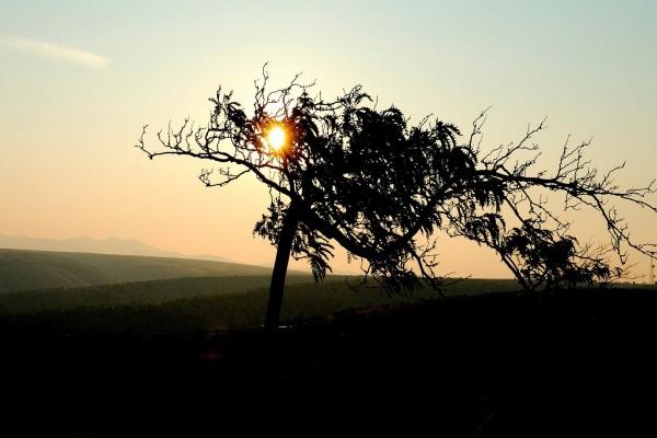 Árbol delante del sol