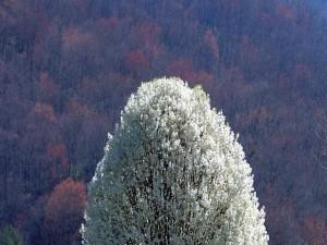 Árbol con flores blancas en otoño