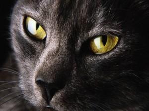 Postal: Gato con ojos grandes
