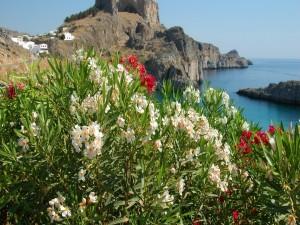 Postal: Plantas con flores en la costa