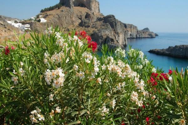 Plantas con flores en la costa