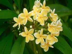 Conjunto de flores amarillas