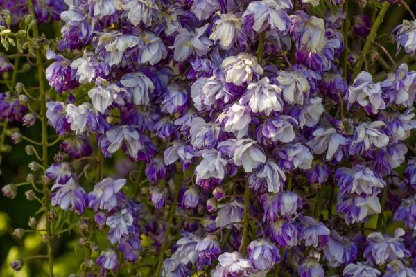 Flores púrpuras y blancas