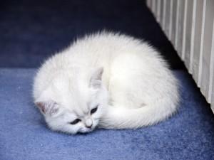 Gatito acurrucado