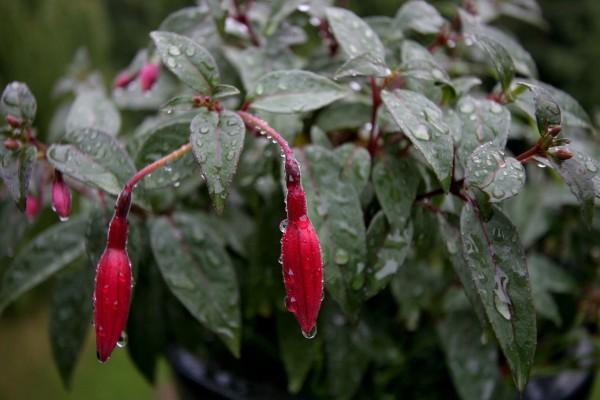 Planta mojada por la lluvia