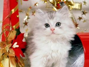 Postal: Gatito junto a la decoración de Navidad