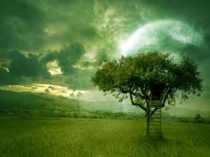 Escaleras en el árbol
