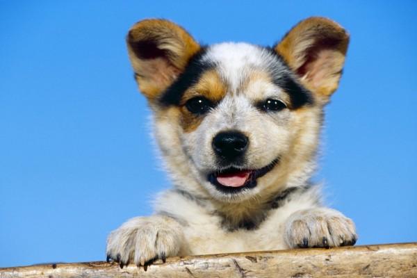 Un perrito gracioso