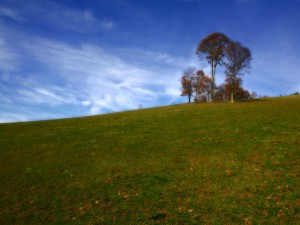 Postal: Árboles en la colina