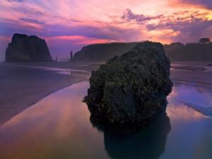 Gran roca con moluscos en la playa