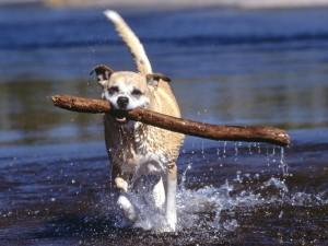 Postal: Perro con un palo en la boca