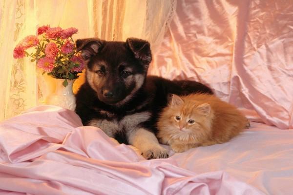 Perro y gato sobre una cama rosa