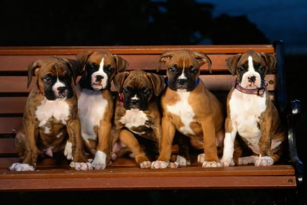 Perros sobre un banco de madera
