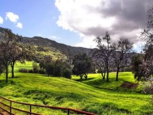 Postal: Prado verde con árboles