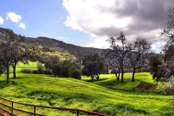 Prado verde con árboles