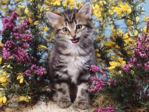 Postal: Gatito feliz entre las flores