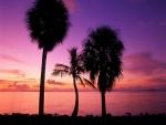 Tres palmeras junto al mar