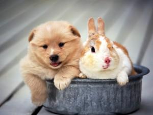 Conejo con un perro
