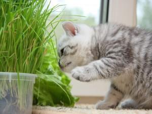 Gato curioso con las plantas