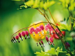 Postal: Pequeñas flores colgando de la rama