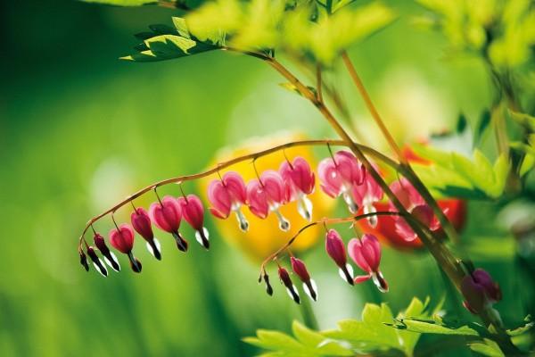 Pequeñas flores colgando de la rama