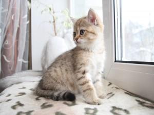 Postal: Gatito cerca de la ventana