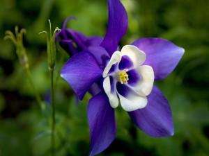 Postal: Bonita flor morada y blanca