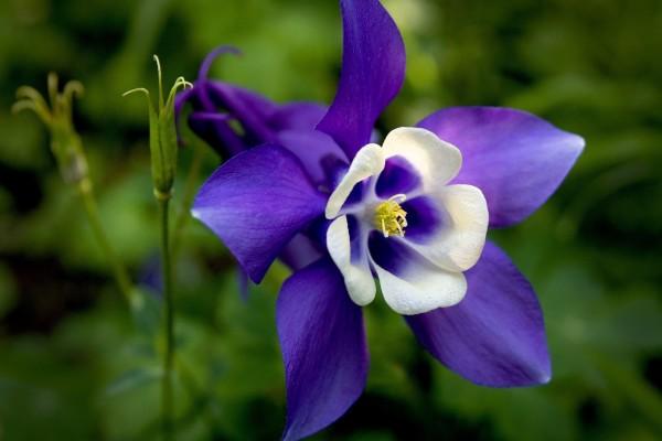 Bonita flor morada y blanca