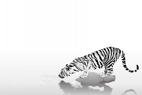 Un tigre que bebe agua