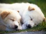 Perros durmiendo sobre la hierba
