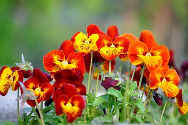 Flores de dos colores