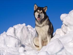 Postal: Perro en la nieve