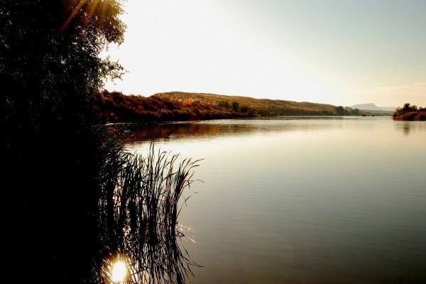 La luz del sol entre la vegetación del lago