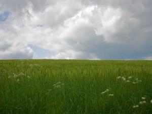 Plantas verdes en el campo