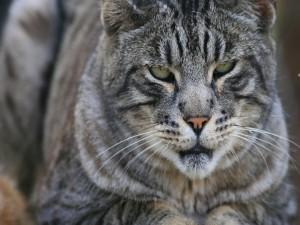 La mirada de un felino