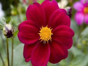 Postal: Preciosa flor de pétalos rojos