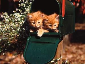 Gatitos en el buzón