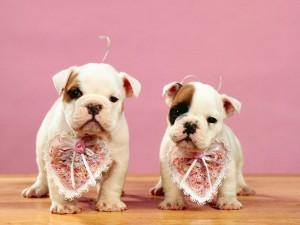 Perritos con corazones