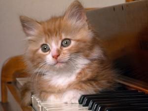 Postal: Gatito sobre las teclas del piano