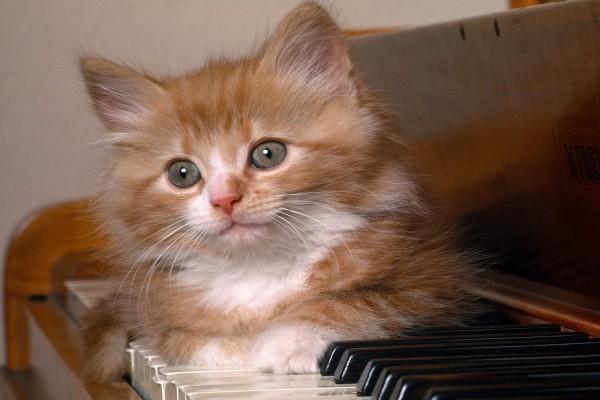 Gatito sobre las teclas del piano