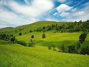 Postal: Casas en la gran pradera verde