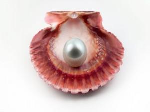 Postal: Perla en la concha