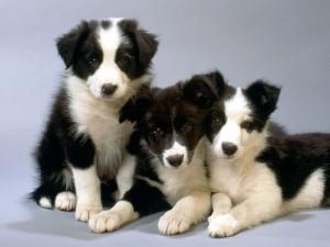 Tres lindos perros